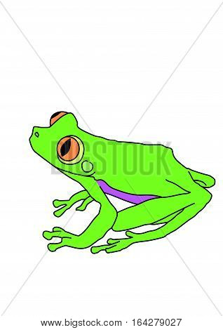 Green frog with long hind legs on a white background.