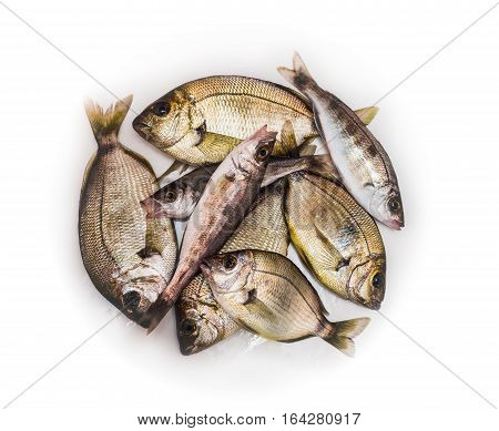fresh sea fishes , isolated on the white background
