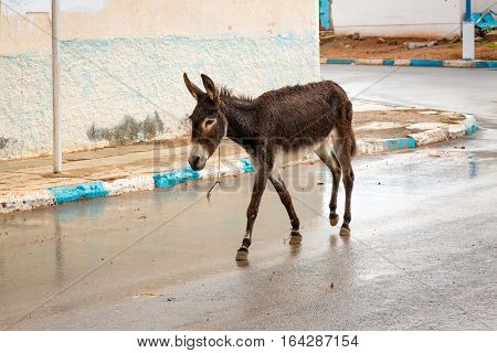 Donkey In The Streets Of Sidi Ifni, Morocco