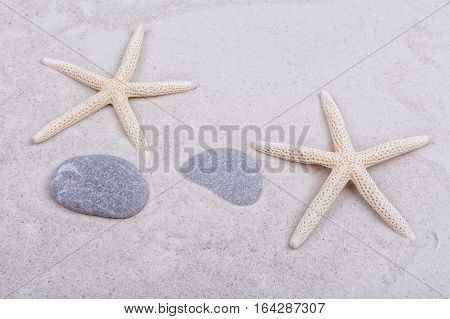 White starfishes and two shells on a greay sand