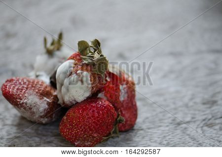 Strawberries berries rot on the floor full of moldy wood Close to detail.