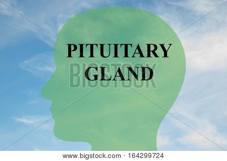 Pituitary Gland Concept