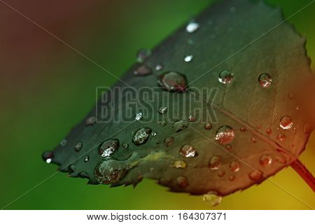 Fresh leaf with dew drops closeup. Nature Background.