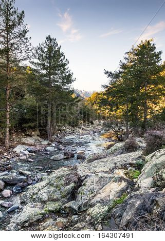 Tartagine river in the Balagne region of Corsica with rocks in the foreground Pine trees and snow capped mountains in the distance under a blue sky