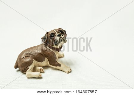 Lying dog photographed on a light background