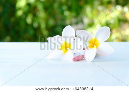 Tropical flowers frangipani (plumeria) on nature background.