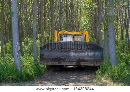 Bulldozer. Mechanical Site Preparation for Forestry. Planting poplars.