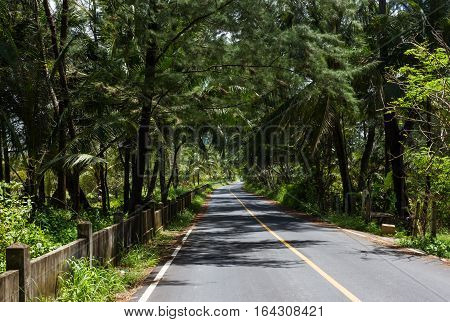 Country road in tropical rainforest. Phuket, Thailand