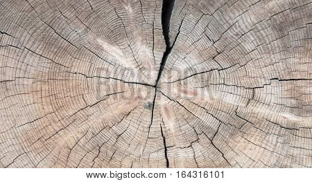 Natural Grungy Wooden Texture. Cut the old cracked Log wood Close Up Background. Wide Horizontal Image Abstract Web Banner Copy Space