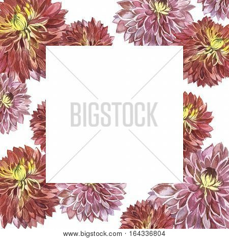 Wildflower aster flower frame in a watercolor style isolated. Full name of the plant: Aster Duchess Mixed