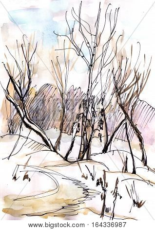 Winter landscape with trees near the road