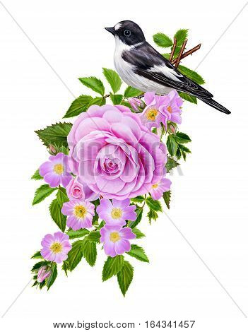Flower composition. The branch of small wild roses bright beautiful large bright pink roses green leaves. Brisk black-and-white bird sitting on a branch. Isolated on white background.
