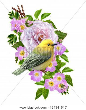 Flower composition. The branch of small wild roses bright beautiful large bright pink roses green leaves. Nimble yellow bird sitting on a branch. Isolated on white background.