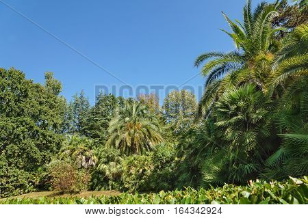 Thickets of subtropical palm trees in the old Park