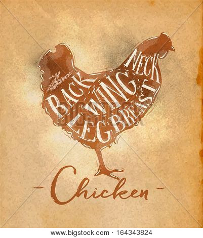 Poster chicken cutting scheme lettering neck back wing breast leg in retro style drawing on craft paper background
