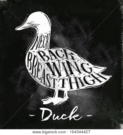 Poster duck cutting scheme lettering neck back wing breast thigh in vintage style drawing with chalk on chalkboard background