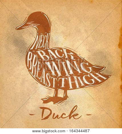 Poster duck cutting scheme lettering neck back wing breast thigh in retro style drawing on craft paper background