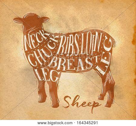 Poster sheep lamb cutting scheme lettering neck chuck ribs breast loin leg in retro style drawing on craft paper background
