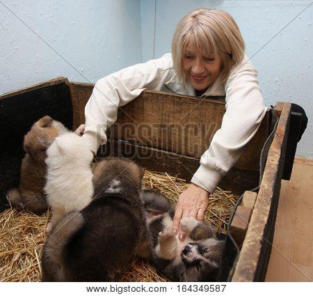 Woman playing with cute newborn Akita Inu puppies