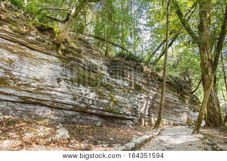Rock landslide that occurred 20 million years ago by tectonic faults on the territory of the yew & boxwood grove