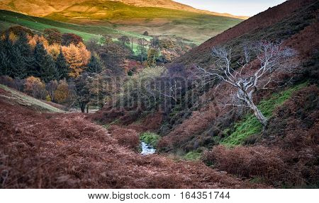 Autumn colors in the Peak district national park England.