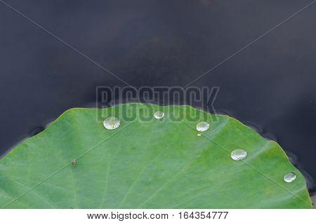 Drop On Lotus Leaf