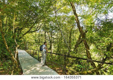 A tourist in the yew-boxwood grove. Khostinsky district, Sochi, Krasnodar Krai