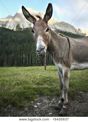 cute & funny donkey  standing outdoors on a farmland and staring at you