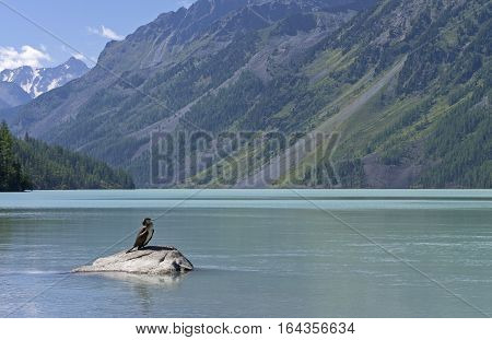 Kucherla lake. Big black cormorant sitting on a rock in the foreground. Altai Mountains Russia. Sunny summer day.