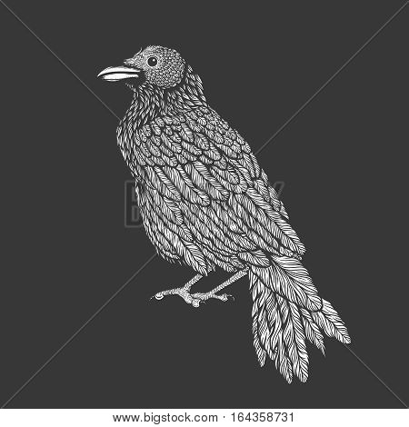 Illustration of raven line art style. Vector illustration of crow hand drawn tattoo
