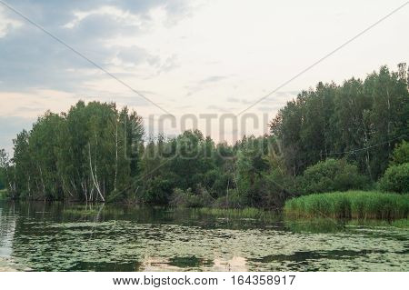 green pond in summer forest nature background