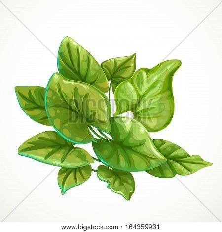 Marine Green Algae Object 1 Isolated On White Background