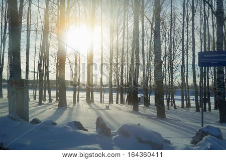 Sun rays getting through winter forest trees sunbeams