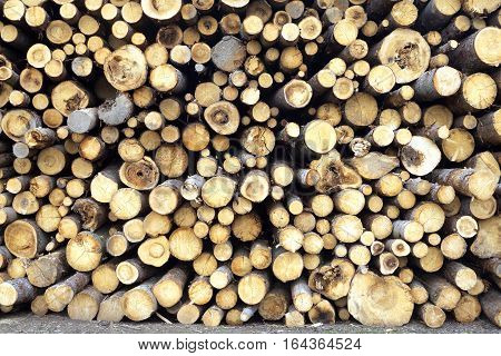 Many bad condition sawed pine logs stacked in a pile front view closeup