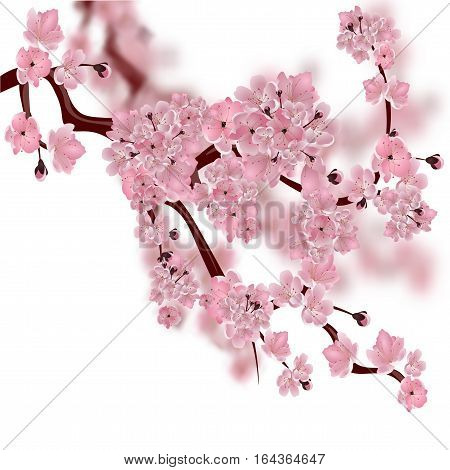 Japanese cherry tree. The fluffy pink cherry blossom branch. Isolated on white background with a blurred background. Vector illustration