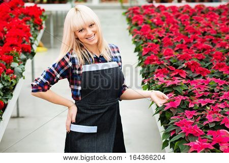 Cheerful charming woman gardener standing against large flower red begonia plantations, looking at camera.