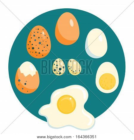Different chicken and quail eggs, raw, boiled and fried, vector illustration