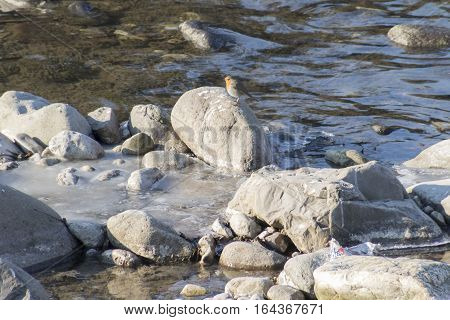 Bird On Rock On River