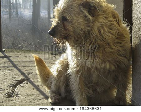 small shaggy dog in winter sitting in the backyard