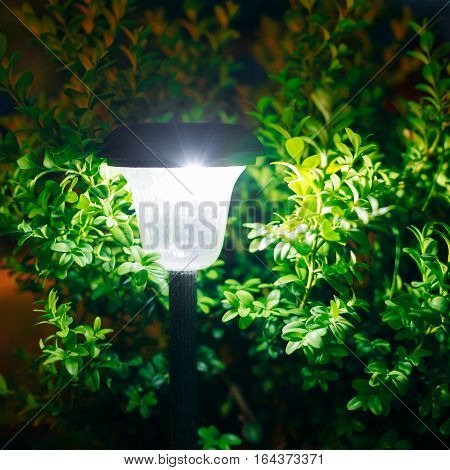 Decorative Small Solar Garden Light, Lanterns In Flower Bed In Green Bushes. Garden Design. Solar Powered Lamp