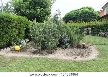 green vegetable garden in a home garden
