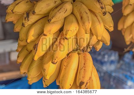 Cluster of bananas in the market Sri Lanka