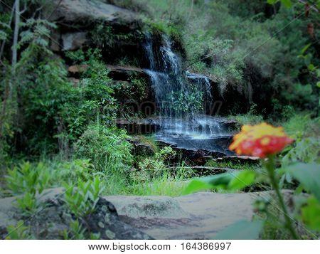 Flor em desfoque e cachoeira em ao fundo.
