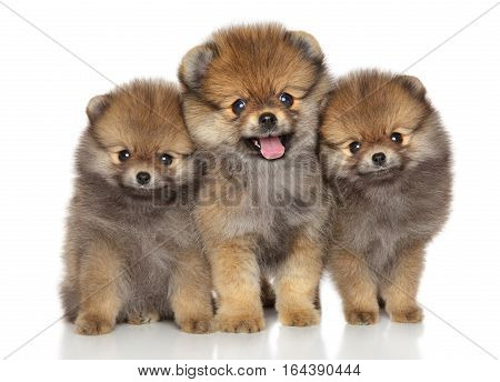 Group of happy Spitz puppies on a white background