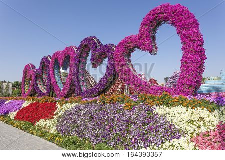 DUBAI UAE - NOV 27 2016: Hearts made of flowers at the Miracle Garden in Dubai. United Arab Emirates Middle East