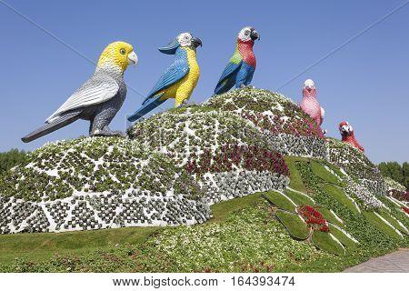 DUBAI UAE - NOV 27 2016: Parrots at the Miracle Garden in Dubai. United Arab Emirates Middle East