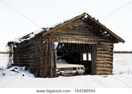 Front end of a vintage car stored in a abandoned crumbling old log cabin shed with vines growing in winter