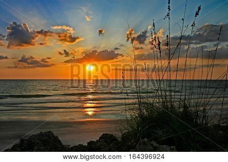 A sunset over the ocean with reeds and rocks