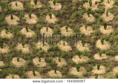 Terrace field on hill, Agriculture scene on mountain in northern of Thailand.