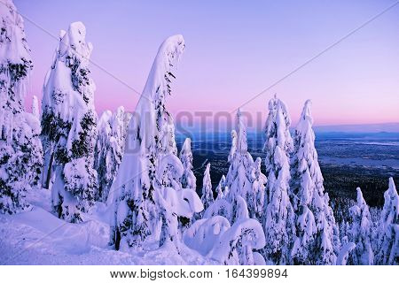 New Year Morning. Trees under snow at sunrise. Grouse Mountain Park. North Vancouver. British Columbia. Canada.